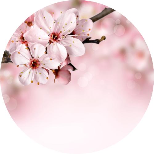 Art Floral ACSBD (Le Mesnil-Esnard 76 240)